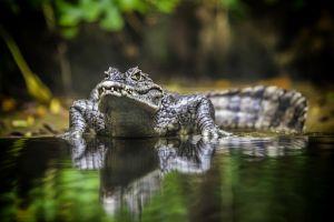 reptiles jungle water animals