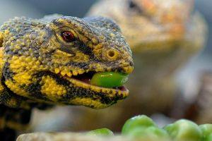 reptiles lizards animals
