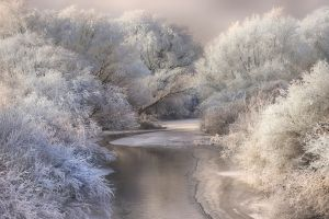 river forest white cold landscape daylight nature winter frost snow