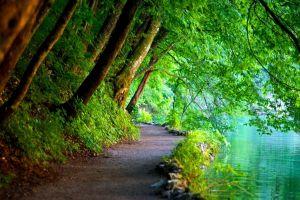 river nature path trees croatia landscape