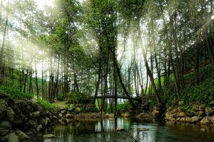 river turkey bridge spring landscape park shrubs morning sun rays nature trees