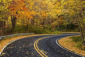 road fall nature fallen leaves forest