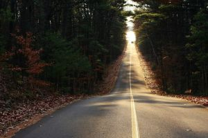 road forest long road fall