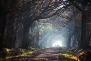 road mist landscape sun rays trees leaves nature grass tunnel
