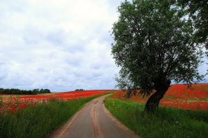 road nature field flowers trees