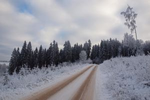 road nature winter pine trees snow trees