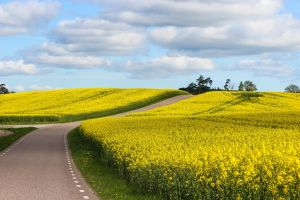 road nature yellow field