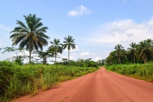road palm trees dirt road tropical landscape