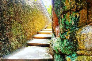 road sri lanka nature photography sea rock stairs trees