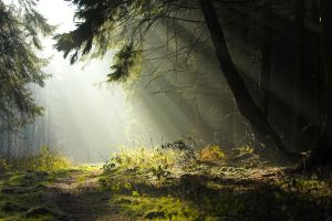 road sun rays grass forest trees