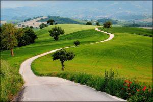 road trees plants landscape
