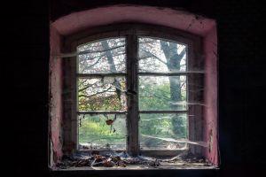 ruin spiderwebs window old