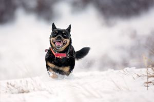 running photography snow animals dog