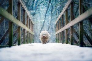 running snow bridge dog