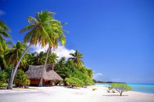 sand tropical nature landscape sea beach summer palm trees cabin vacation