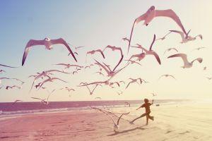 seagulls photography children beach