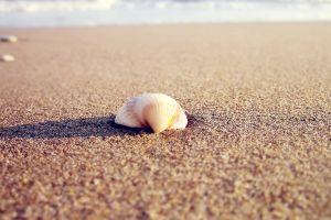 seashell coast beach