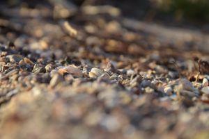 seashell ground depth of field macro