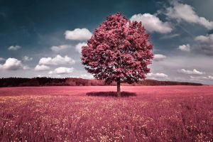 selective coloring grass trees sky clouds