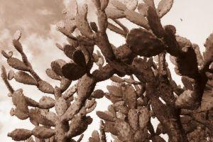 sepia plants cactus nature succulent