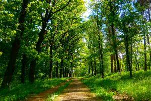 serbia nature serbia park