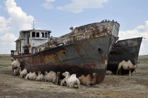 ship camels vehicle wreck