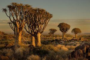 shrubs africa landscape sunset savannah nature trees namibia