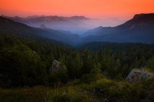 shrubs amber forest landscape grass sky bosnia nature mist mountains