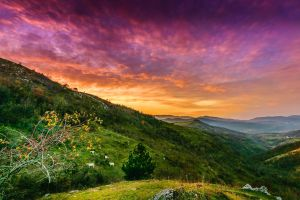 shrubs cow nature green landscape pink yellow mountains grass valley sunset trees clouds