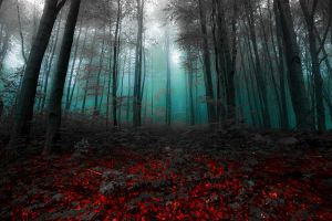 shrubs fairy tale nature mist magic gray morning trees landscape red turquoise