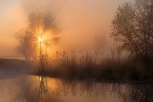 shrubs trees mist landscape nature sunbeams river