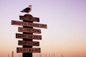 signs birds animals