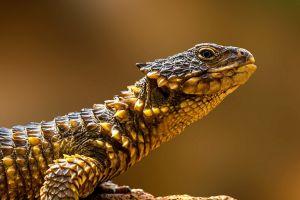 simple background animals reptiles
