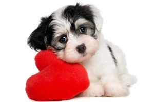 simple background puppies heart white background dog animals baby animals pet