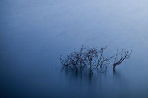simple water branch blue long exposure