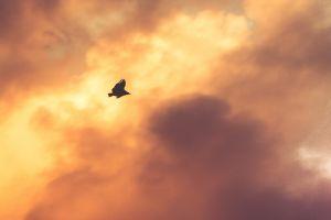 sky birds clouds sunlight