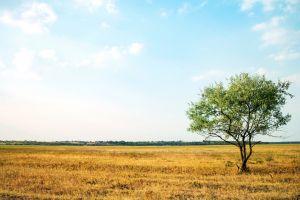sky nature landscape trees field