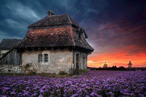 sky purple clouds lavender farm nature spring field house old sunset flowers landscape