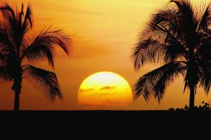 sky silhouette palm trees tropical sunset horizon