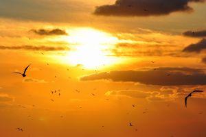 sky sun birds nature
