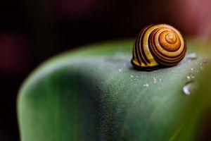 snail leaves macro