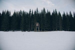 snow forest landscape