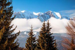 snow landscape pine trees