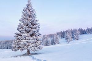 snow landscape trees forest nature