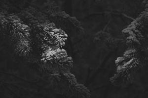 snow monochrome winter dark plants