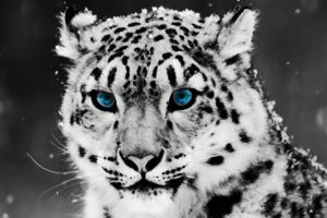 snow nature digital art big cats animals