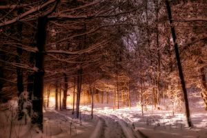 snow nature winter forest landscape trees path maine sunlight