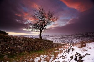 snow snow trees landscape