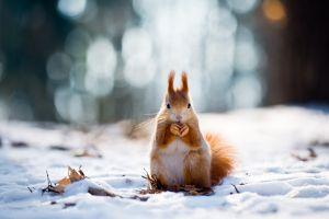 snow squirrel leaves winter animals bokeh depth of field