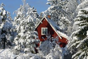 snow trees house forest winter